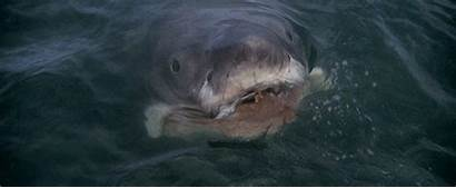 Jellyfish Shark Jaws Attacks Friend Got Attack