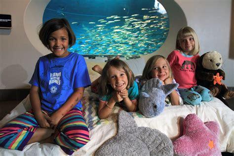Youth group sleepovers | Monterey Bay Aquarium