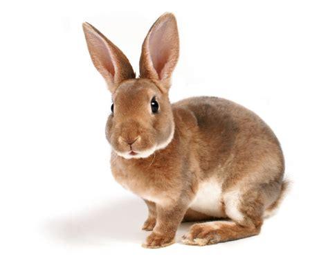 l alimentation du lapin nain news vetocourtiade