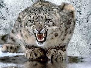 Le Wolfe Magique: Domestic Leopard - The Bengal Cat