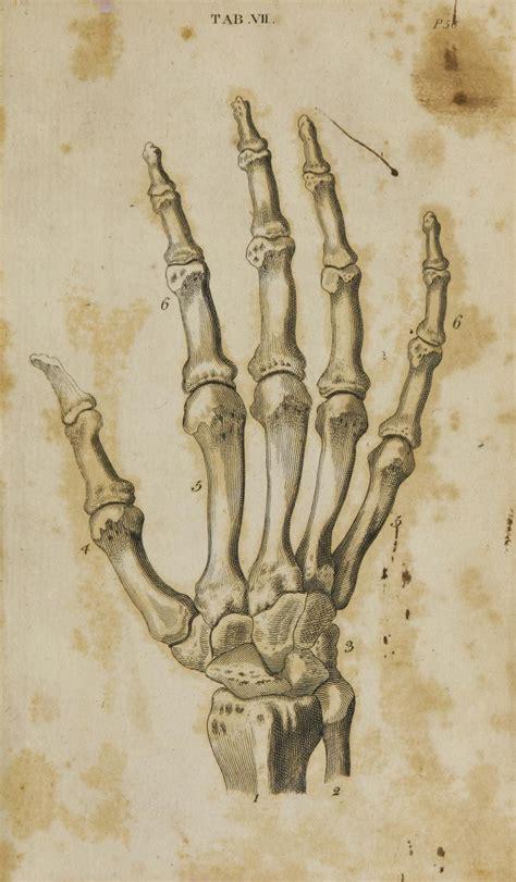 Tavole Anatomiche by Tavole Anatomiche Anatomiaartisticauno