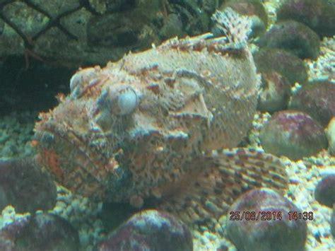 aquarium du 7eme continent aquarium du 7eme continent 28 images journ 233 e 224 l aquarium le 7e continent aquarium du
