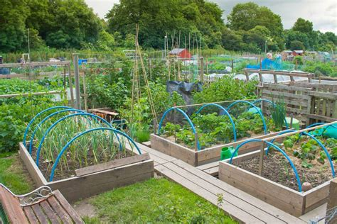 efficient small home plans vegetable garden ideas photos gallery of simple layouts