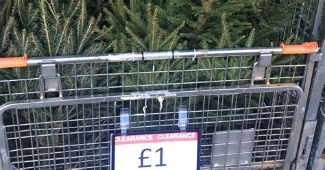 best 28 trees for sale b and q b q sale