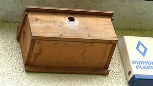 House Sparrow Nestbox - Box 1 #1 - YouTube