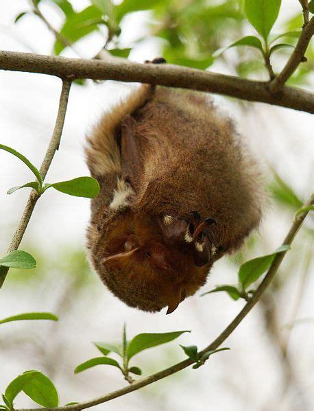 galapagos bat wildlife conservation trust