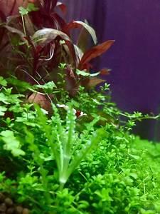 Pflanzen Im Aquarium : pflanzen im aquarium cube60 aus cube60 von tom81 ~ Michelbontemps.com Haus und Dekorationen