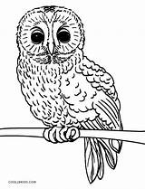 Owl Coloring Pages Realistic Owls Printable Cool2bkids Getcolorings sketch template