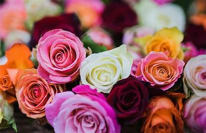 Flower Colors Meaning Flowers Whats Meanings Deep