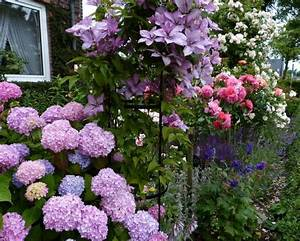 Rose Mein Schöner Garten : hortensien und rosen seite 1 rund um die rose ~ Lizthompson.info Haus und Dekorationen