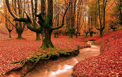 Backgrounds Desktop Autumn Wallpapers Fall Forest Season