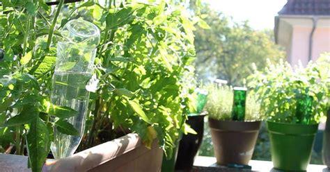 pflanzen bewässern pet flaschen bew 228 sserungssysteme aus pet flaschen selber machen mein sch 246 ner garten