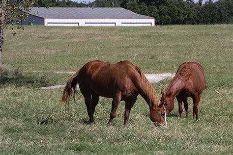 texas horse bird horses disease mosquito confirmed viral farm texasfarmbureau