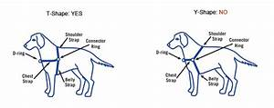 Easy Walk Harness Fitting Tips