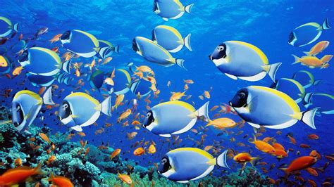 Beautiful Sea Animals Wallpapers - top 50 beautiful fish facts photos colorful wallpapers