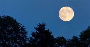 Mein Schöner Garten Mondkalender 2017 : mondkalender g rtnern mit dem mond mein sch ner garten ~ Whattoseeinmadrid.com Haus und Dekorationen