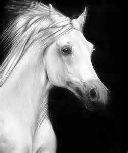 Realistic Animal Drawings Black and White