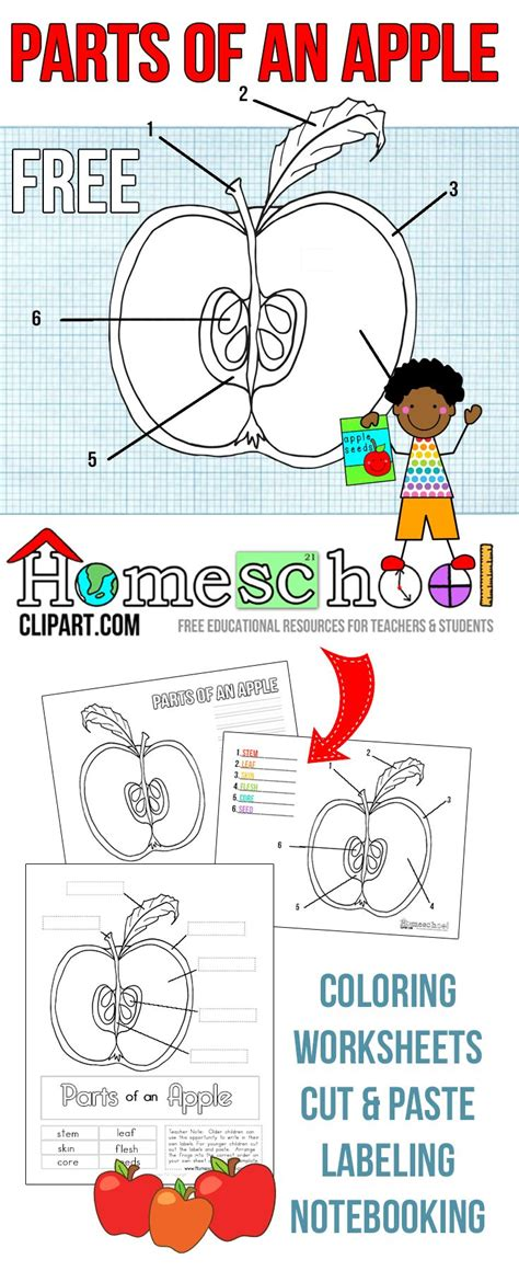 best 25 apple activities ideas on preschool