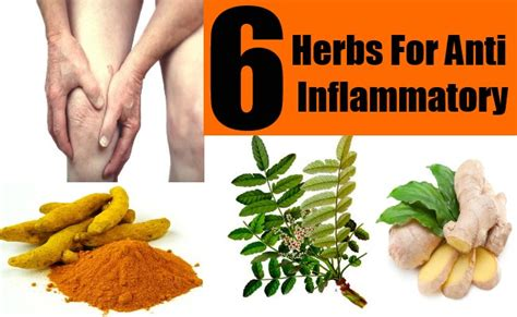 6 Natural Anti Inflammatory Herbs  How To Treat. Roofing Companies In Northern Va. Dental Hygienist Salary Houston Tx. Water Heater Repair St Louis. Motorcycle Attorney Los Angeles. Real Business Magazine Pods Moving Containers. Virtual Office Portsmouth Best Credit Scores. Sprouts Employee Portal Asset Allocation 401k. Small Business Insurance Brokers
