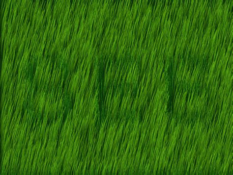what type of grass is sod cwwang com 187 archive 187 grass type