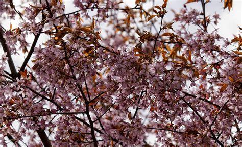 Free Images : tree branch plant leaf flower food