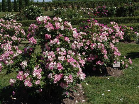 Latvijas rožu dārzs - Rundāles pils