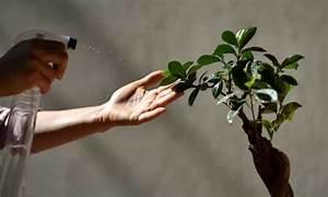 watering bonsai how often do you water the bonsai tree