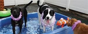 Pet boarding daycare and grooming in wausau wi for Red dog daycare