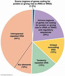 BIOL2060: DNA, Chromosomes & the Nucleus