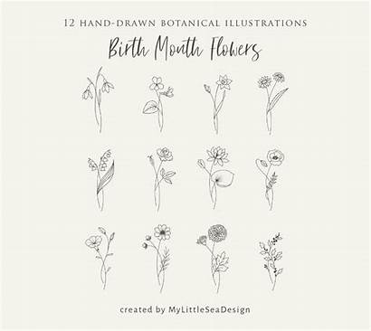 Svg Clipart Birth Flowers Bundle Floral Month