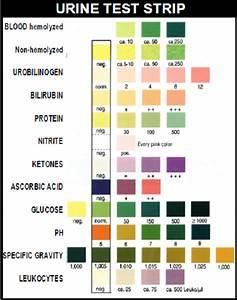 Laboratory Values And Interpretation - A Nurse U0026 39 S Ultimate Guide