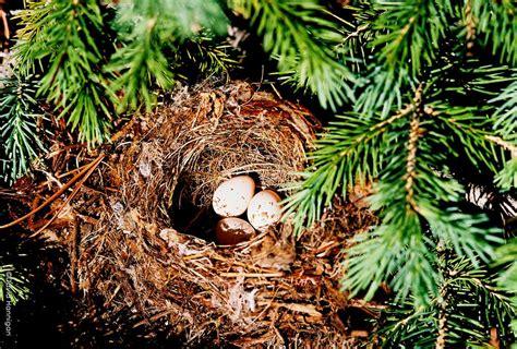 Understanding and Identifying Bird Nests - Colorado Virtual Library