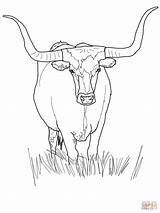 Longhorn Coloring Texas Bull Cattle Cow Supercoloring Drawing Outline Head Printable Ferdinand Visit Face Austin Tips Horn Getdrawings Draw Sketch sketch template