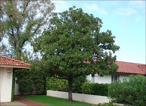 Magnolia Tree Nursery
