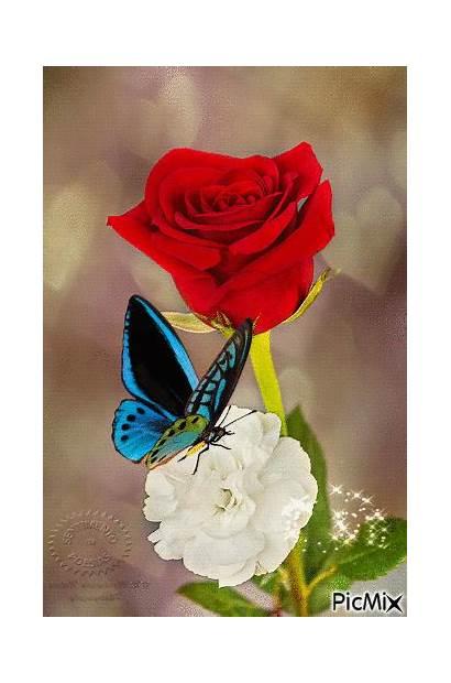 Rosas Gifs Mariposas Hermosas Flowers Flores Bonitas