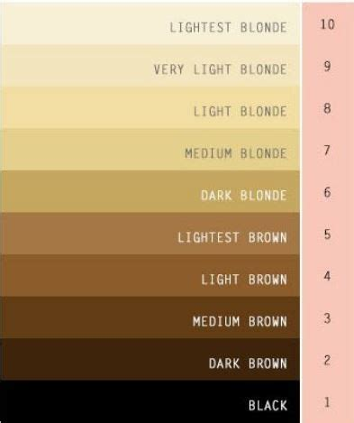 Light Brown Hair Vs Brown Hair by What S The Difference Between And Light