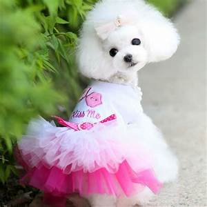 puppy dog cat pet summer dress lace apparel skirt dress With robe pour chien