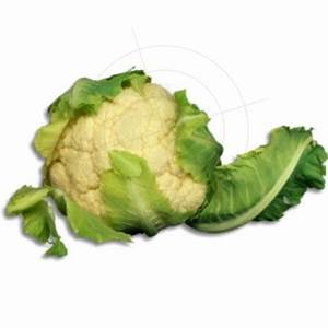 Obst Und Gemüse Online Bestellen Auf Rechnung : aufkleber blumenkohl schaufensteraufkleber und fensterfolien online bestellen ~ Themetempest.com Abrechnung