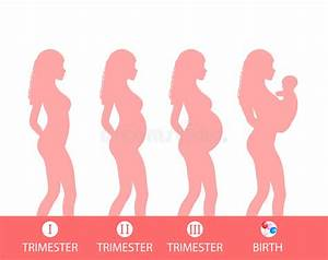Pregnancy Silhouette, Stage Of Pregnancy, Trimesters ...