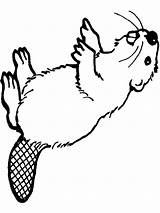 Beaver Coloring Pages Printable Animal Print Animals sketch template