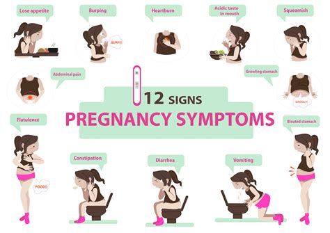 Pregnancy Information And Resources, Growing A Person