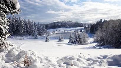 Winter Forest Nature Wallpapers Desktop Scenes Landscape