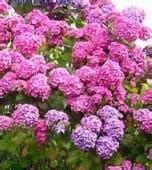 shade loving perennials uk shade loving plants make the most out of your problem areas in the garden