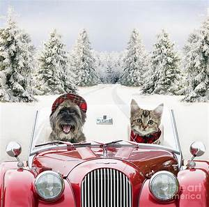 Dog And Cat Driving Car Through Snow Photograph by John
