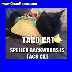 Cat Memes | Clean Memes – The Best The Most Online