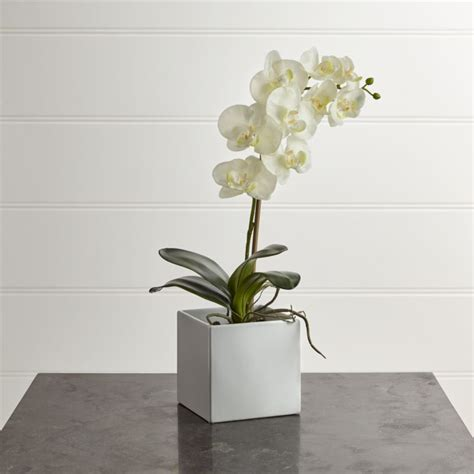 Large Artificial Orchid + Reviews | Crate and Barrel