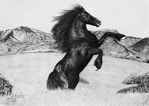 Horse pencil drawing by Belalkamel on DeviantArt