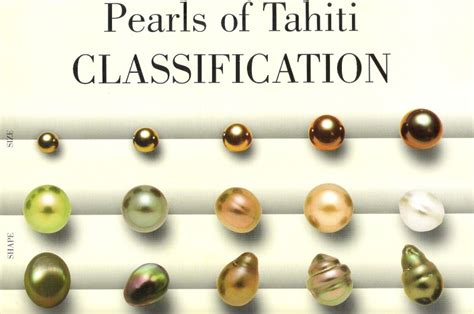 Le Berger L Perle by Prix Des Perles Noires De Tahiti