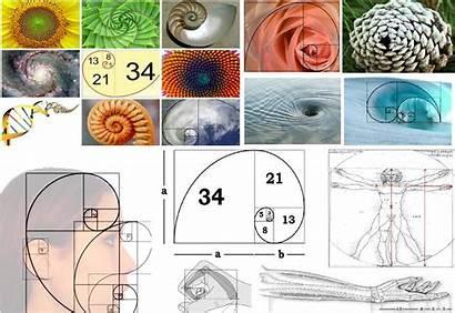 Fibonacci Sequence Examples Knowing Worth Universe Ratio