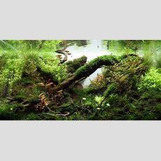 Understanding Jungle Aquascaping Style  The Aquarium Guide